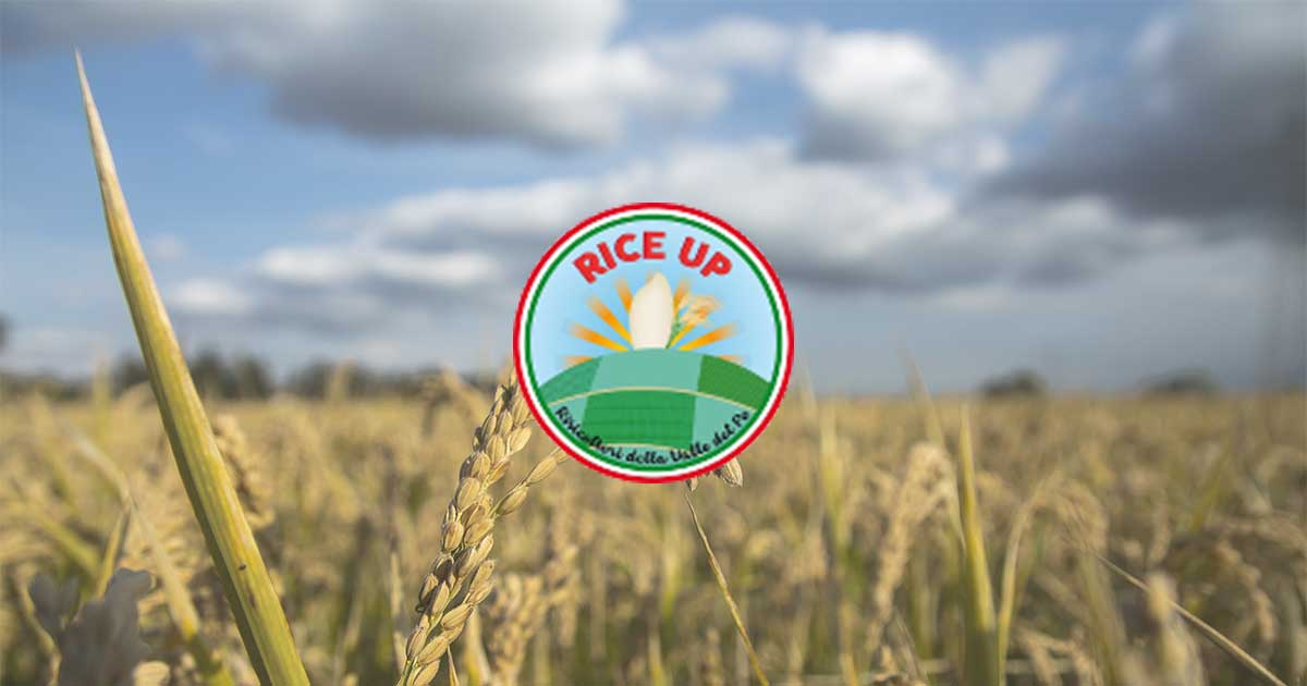 www.riceup.it